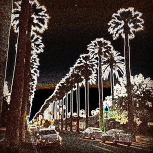 Palm Trees photo by Elinor Mills
